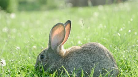 野生の動物 : Little rabbit on green grass in summer day
