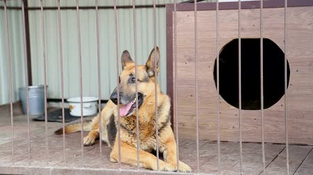 German Shepherd behind the bars. Dog in a cage in a shelter for dogs