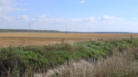 autumn field and dry grass in the foreground and trees