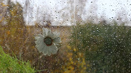 rain on the street. a lone flower stands. on the glass. autumn.