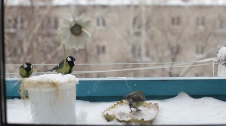 feeder : The bird has sat down on the bird feeder and eats in the winter. the city and the big house in the background. Stock Footage