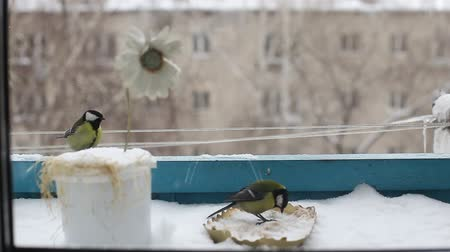 karmnik : The bird has sat down on the bird feeder and eats in the winter. the city and the big house in the background. Wideo