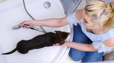 ângulos : Woman washing her little dog in bath Stock Footage