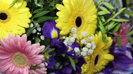 sarıcı : Rotating beautiful bright bouquet of multi-colored gerberas and irises. A perfect gift for a woman.