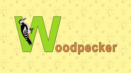 alphabet : Animation English ZOO alphabet. Letter W and word Woodpecker. 2D handmade animation. Stock Footage
