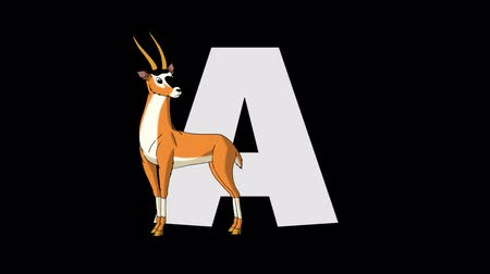 memeli : letter A - Antelope on foreground Stok Video