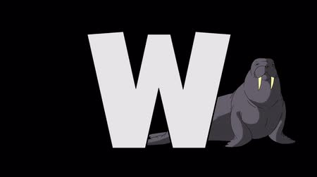 letter w : Letter W and Walrus (background) Stock Footage