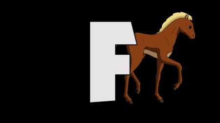 letter f : Letter F and Foal (background) Stock Footage