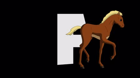 letter f : Letter F and Foal (foreground) Stock Footage