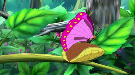hernyó : Metamorphosis from Caterpillar to Butterfly. Handmade Animation.