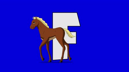 letter f : Letter F and Foal (foreground) Animated animal alphabet. Motion graphic with chroma key. Animal in a foreground of a letter.