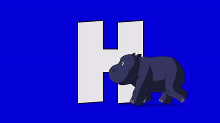 abeceda : Letter H and Hippo (foreground) Animated animal alphabet. Motion graphic with chroma key. Animal in a foreground of a letter.