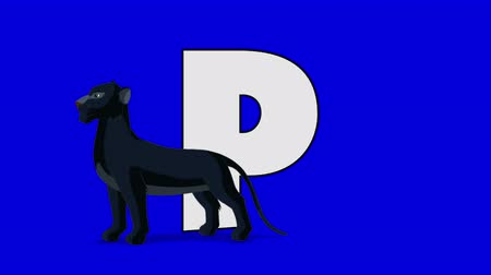 panter : Letter P and Panther (foreground) Animated animal alphabet. Motion graphic with chroma key. Animal in a foreground of a letter.