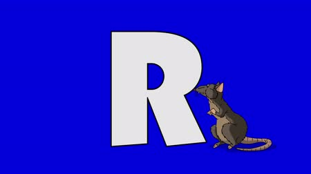 krysa : Letter R and Rat (foreground) Animated animal alphabet. Motion graphic with chroma key. Animal in a foreground of a letter.