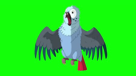 arara : Blue Parrot Gets Angry. Green Screen Video Footage. Looped motion graphic.