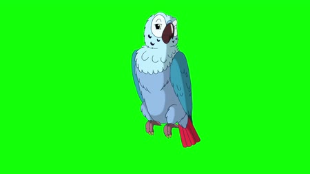 ara papagáj : Blue Parrot Talking. Green Screen Video Footage. Looped motion graphic.