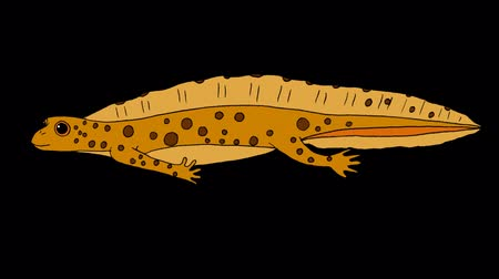 triton : Yellow Newt Swimming. Animated footage with alpha channel. Stock Footage