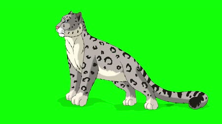 brindle : Snow Leopard Stands and Looks Around. Animated Motion Graphic Isolated on Green Screen.