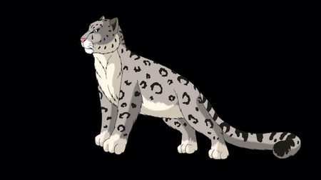 brindle : Snow Leopard Stands and Looks Around. Animated Motion Graphic with Alpha Channel. Stock Footage