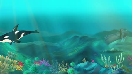 killer whale : Killer Whale Underwater. Handmade animation, motion graphic.