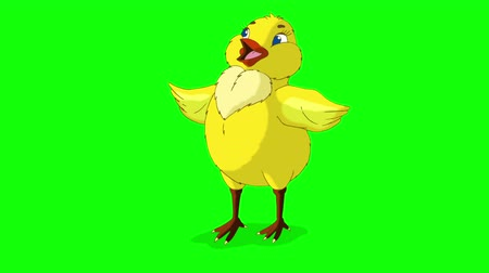 baby chicken : Yellow Chicken Stands and Tweets. Animated Looped Motion Graphic Isolated on Green Screen Stock Footage