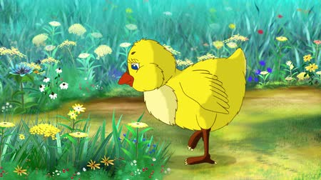Yellow Chicken Looking for Food on a flower meadow in a sunny day. Handmade animation, motion graphic.