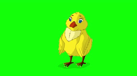 Yellow Chicken Stands and Pecks. Animated Motion Graphic Isolated on Green Screen