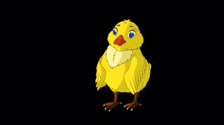 csaj : Yellow Chicken Stands and Pecks. Animated Motion Graphic with Alpha Channel