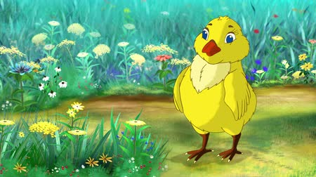 Yellow chicken bows on a flower meadow in a sunny day. Handmade animation, motion graphic.