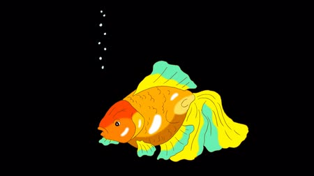 seqüência : Multicolored Goldfish Floating in Aquarium. Animated Looped Motion Graphic with Alpha Channel.