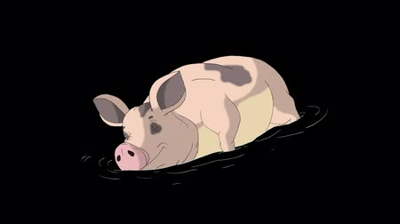 Big Yellow-pink Pig sleeps and wakes up in a puddle. Animated Looped Motion Graphic with Alpha Channel. Happy Chinese New Year 2019