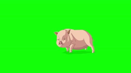 Yellow-pink Little Piggy Runs with a Stop. Animated Looped Motion Graphic Isolated on Green Screen. Happy Chinese New Year 2019