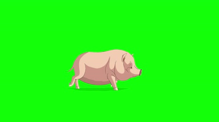 porquinho : Yellow-pink Little Piggy Runs. Animated Looped Motion Graphic Isolated on Green Screen. Happy Chinese New Year 2019 Stock Footage