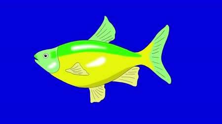 Big Green-yellow Aquarium Fish floats in an aquarium. Animated Looped Motion Graphic Isolated on Blue Screen Стоковые видеозаписи