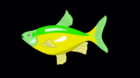Big Green-yellow Aquarium Fish floats in an aquarium. Animated Looped Motion Graphic with Alpha Channel.