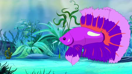 fiatal kis kakas : Purple Aquarium Cockerel Fish Floats in an aquarium. Handmade animation, looped motion graphic.