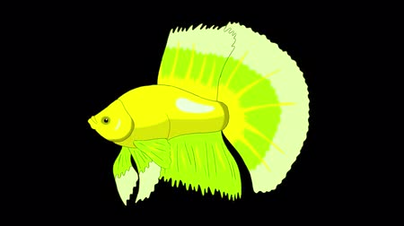Big Green Aquarium Cockerel Fish Floats in an aquarium. Animated Looped Motion Graphic with Alpha Channel.