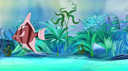 Pink Scalare Angelfish swims in an aquarium. Handmade animation, looped motion graphic.
