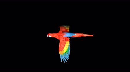 4K Red Parrot Transparent Alpha Loop Animation