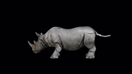 4K Rhino Head Transparent Alpha Loop Animation