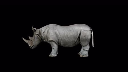 savanne : 4K Rhino Idle Transparente Alpha Loop Animation Videos