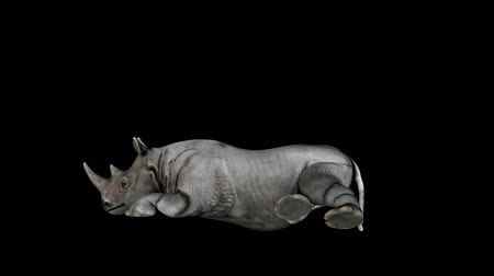 4K Rhino Sitting Transparent Alpha Loop Animation Стоковые видеозаписи