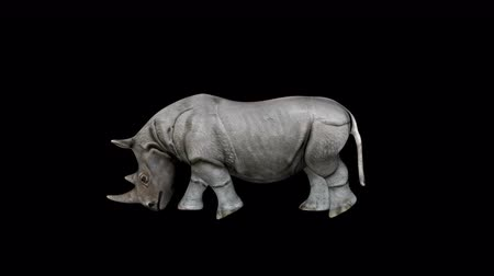 savanne : 4K Rhino Walk Transparente Alpha Loop Animation