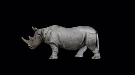 носорог : 4K Rhino Walking Transparent Alpha Loop Animation