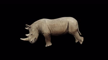 4K Rhinoceros Head Attack Transparent Alpha Loop Animation