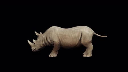 4K Rhinoceros Head