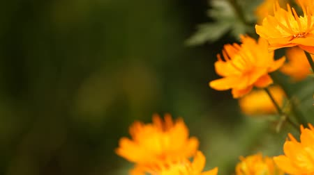 freshness background : flowers in the garden Stock Footage