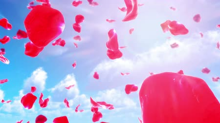 zmysłowy : Rose Petals Falling from Sky (Loop). Seamlessly loopable realistic animation of falling rose petals.