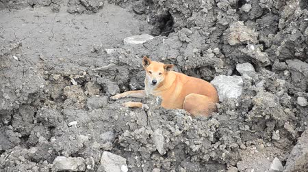 perdido : Dog waiting of owner after them leave it at construction site in Bangkok Thailand