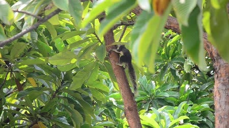 белка : Squirrel walking on the tree at garden in Bangkok Thailand